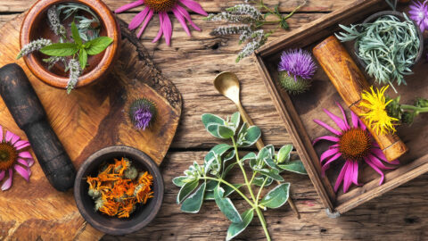 The Best 13 Adaptogenic Herbs for Hormone Balance